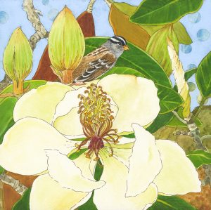 LisaSkyheartMarshall_WhiteCrownedSparrowMagnolia-watercolor_ink-8x8