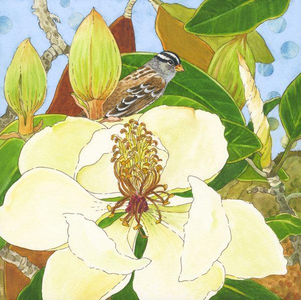 LisaSkyheartMarshall_WhiteCrownedSparrowMagnolia-watercolor_ink-8x8