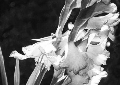 DaffodilsDarlene Roker, photograph