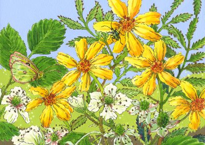 Lisa Skyheart Marshall, Olallieberries Sunflower, watercolor+ink 8x8