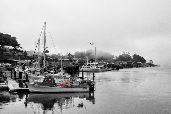 Darlene Roker Dockside Photo On Aluminum 20x30 2